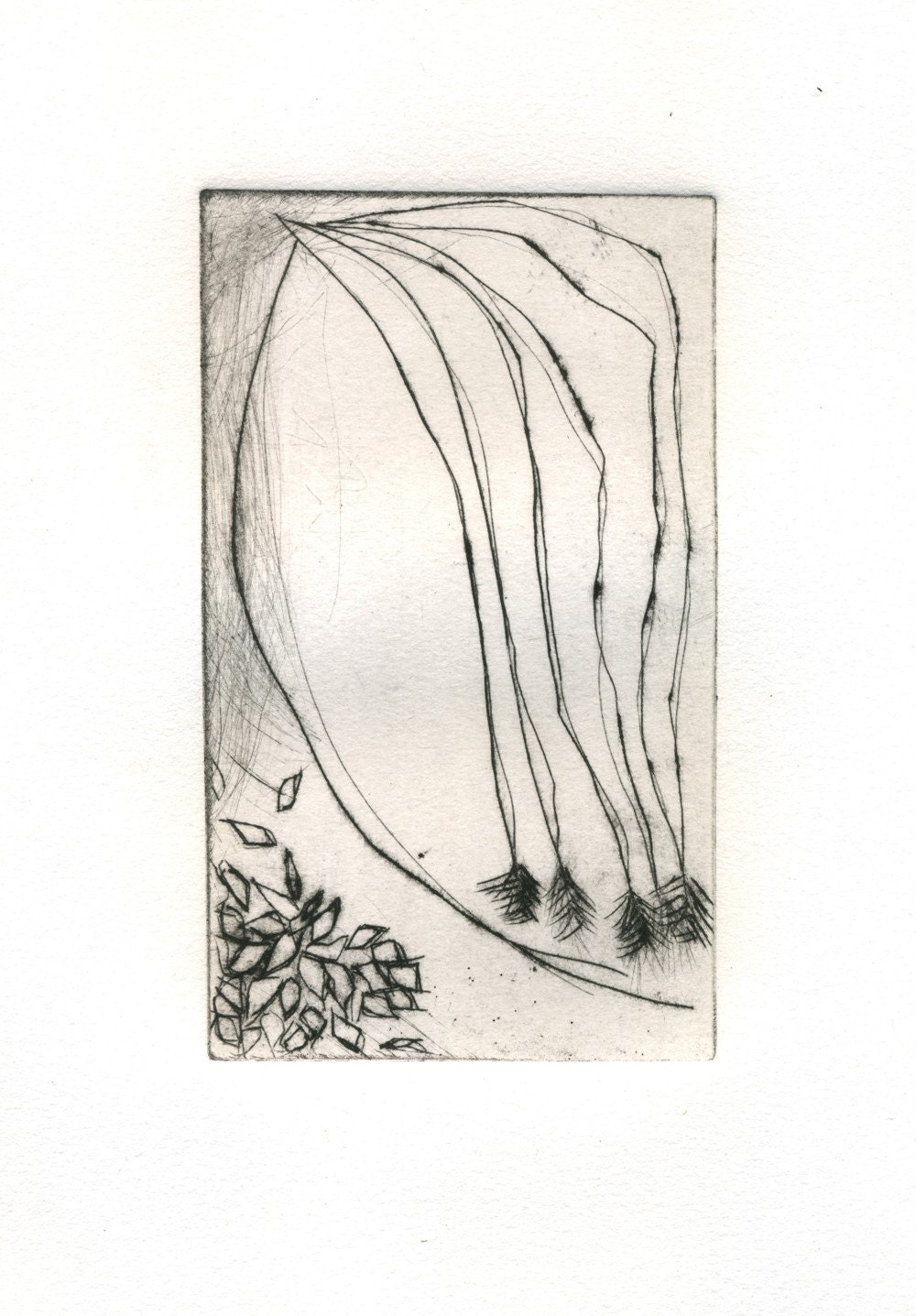 art print etching, Garden Detail - 88editions