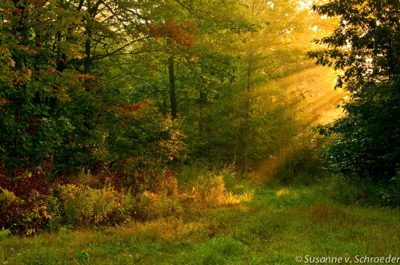 Mabon Autumnal Equinox Alban Elfed Second Harvest