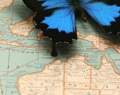 Map of Australia with Blue Mountain Butterfly Display