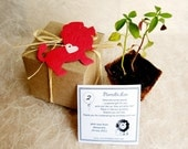 10 Plantable Paper Lions - Zoo Wedding Favor - Flower Seed Paper