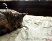 Kitty Sleeping on Bed - 8x12 Fine Art Photography - unframed, unmatted