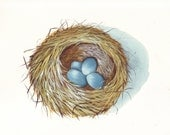 Bird Nest painting print of gouache and watercolor painting - Splodgepodge
