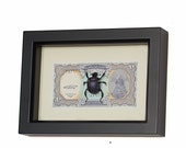 Framed Scarab Beetle with Egyptian Money Insect Display