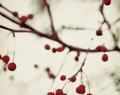 Nature Photography - Dark Berries 5x5 Photograph - dreamy red winter white holiday print - ellemoss