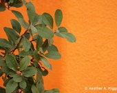 Orange Wall, Green Plant, Bright, Bold