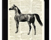 Arabian Horse Dictionary Print Made From Antique Ex Libris and Antique Dictionary Page