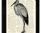 Stork Bird Dictionary Print Made From Antique Illustration Engraving and Antique Dictionary Page