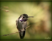 Hummer ... Photography Art