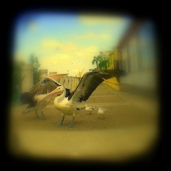 Fine Art Photo Print Pelicans Seagulls Birds Summer 4 x 4 TtV Photograph