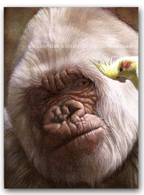 Albino Gorilla and Yellow Parrot ACEO Print