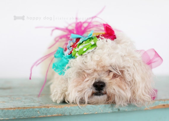 SHEs  OFF to see THE WIZARD   hairpiece for pets, puppies, collar, little dog, photoshot props, canine, small dog, doghairpiece