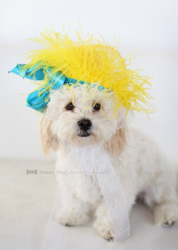 BRIGHT AWAKENING   hairpiece for pets, puppies, collar, little dog, photoshot props, canine, small dog, doghairpiece