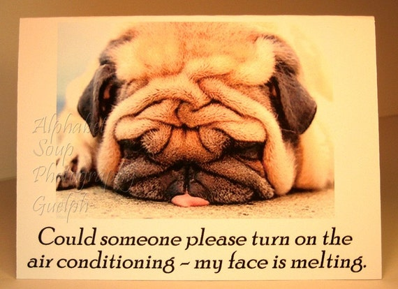 Melting Face Pug - blank greeting card with dog - Could someone please turn on the air conditioning - my face is melting