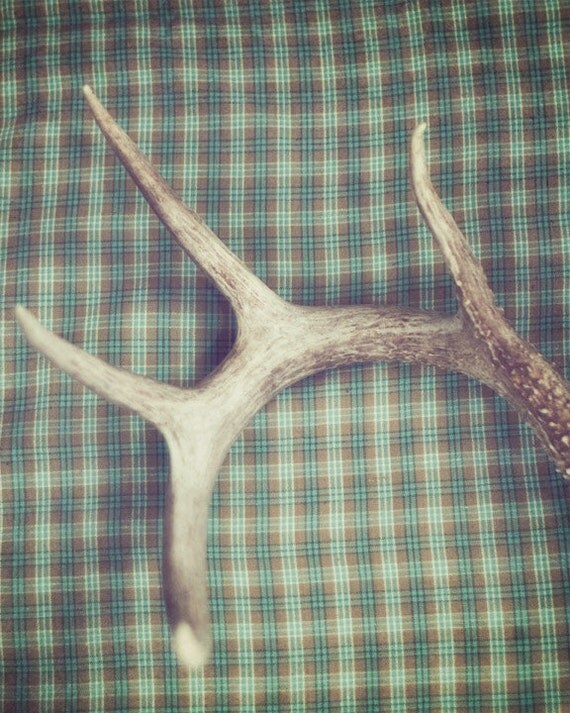Antler - 8 x 10 Fine Art Photograph - teal turquoise green plaid antlers rustic home decor print