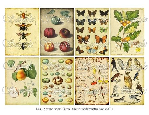 Nature Book Plates ATC Digital Collage ACEO Backgrounds 2.5 x 3.5 Vintage Digital Collage Sheet Eggs Owl Bees Pear Apple Butterfly Tags 153