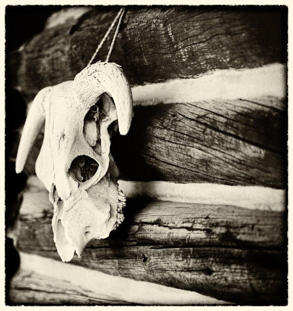Sun Valley, Idaho, Skull 10 x 7 Fine Art Photo