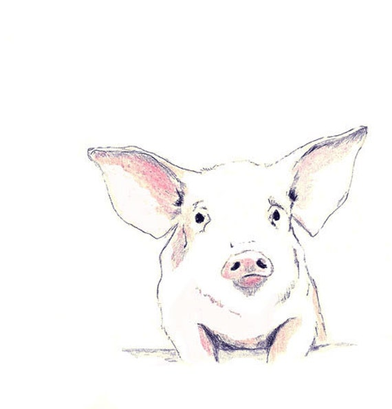 Free Shipping - Pig Art Print - Some Pig