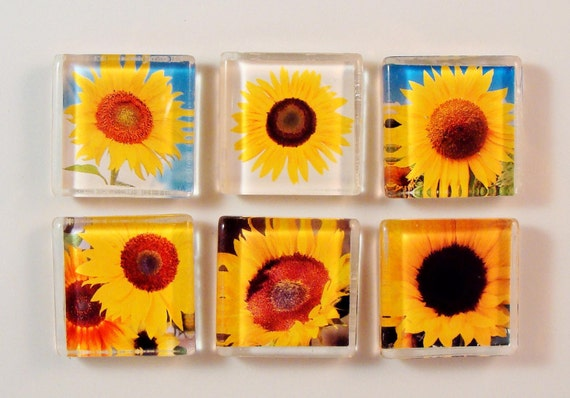 FALL SUNFLOWER MAGNET glass set of six 1 inch square with rare earth neodymium magnet