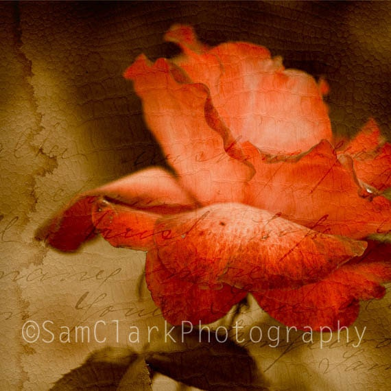 Red Rose Photo - Wall Art - 'The Departed' - Vintage Aged Look, Red Rose with Love Letter, Fine Art Photo 10x10 inch