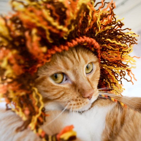 lion halloween costume for cat