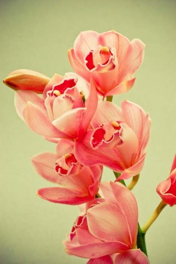 Урожай ботанического сада.  розовый коралл орхидеи печати.  цветок фотографии.  потертый шик дома.  очаровательный коттедж шикарный искусства.  подарок для нее