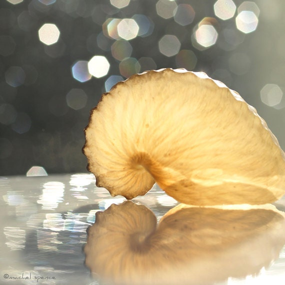 Paper Nautilus 10X10 Photograph...Affordable Art Beach Decor Ocean Sea Salt Natural Art Bokeh Nautilus Shell Beauty