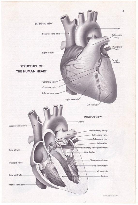 Human Body Parts Diagram Human Body Parts Chart Human Anatomy