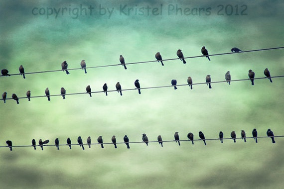 Birds on a Wire 8x10 Signed Fine Art Photograph - photo Moody surreal clouds greens aquas sepia clouds